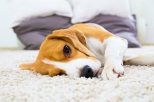carpet cleaning exposure to dirt